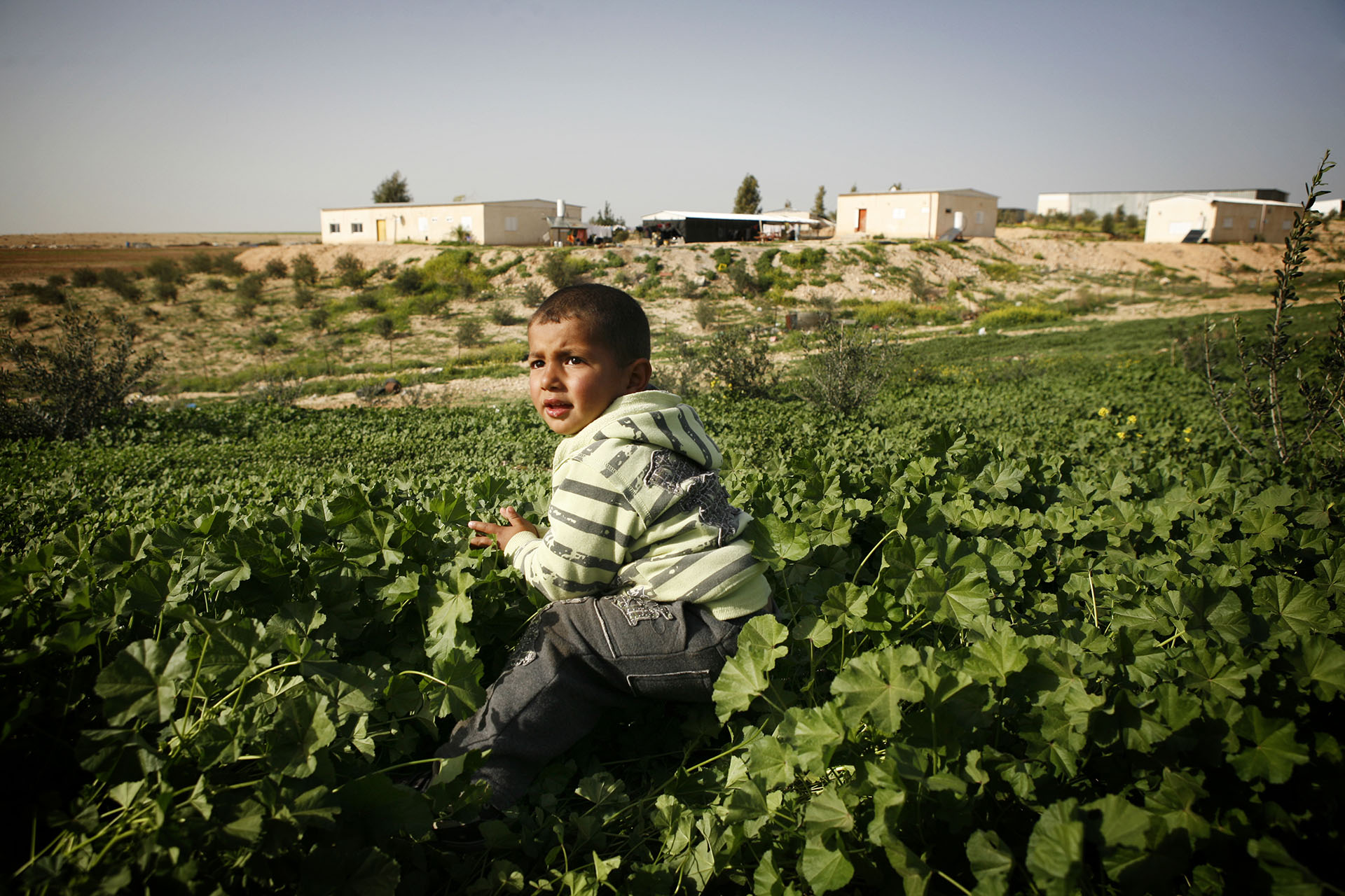 In winter, the usually monochrome landscape turns green. Mohammed plays among the plants. In the background, some of the homes making up Al Araqib, February 2010